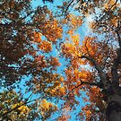 Golden Canopy by ashleyDcrouse