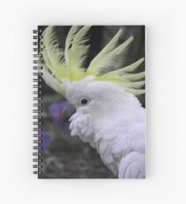 Sulphur Crested Cockatoo - Science Park, South Australia Spiral Notebook