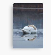 Swan Resting on Ice Canvas Print