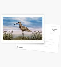 Whimbrel Postcards