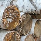 Birch Logs by Ryan McGurl