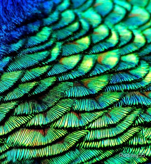 Natural Pattern by Rodney55