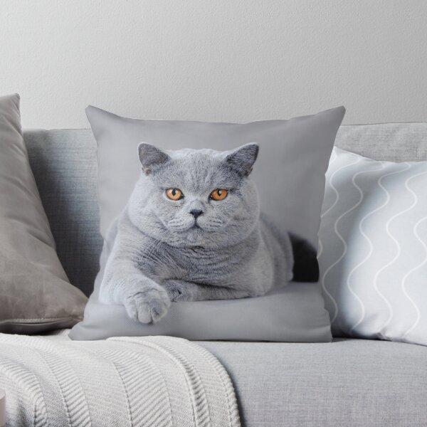 British shorthair cat portrait Throw Pillow