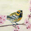Townsend's Warbler by Julie Ann Accornero