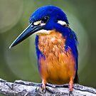 Azure kingfisher by tarnyacox