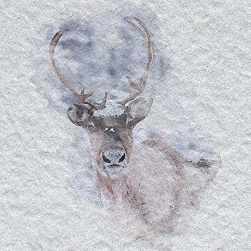 Watercolour Reindeer by Kelly-Ferguson