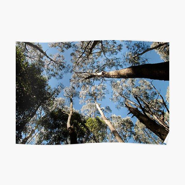 Treetops, Sanitorium Lake Poster