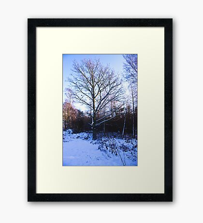 Snow in the Woods Framed Print