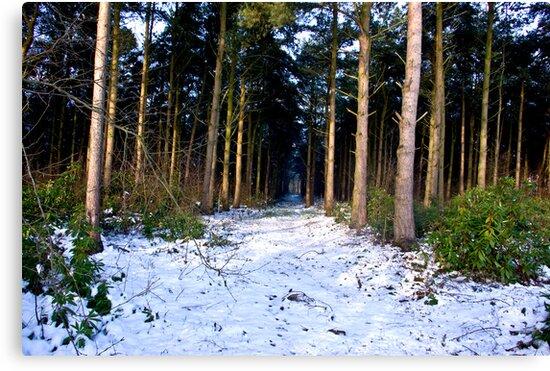 Snow Path by Trevor Kersley