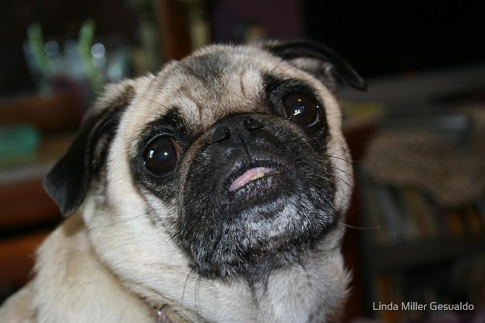 My Precious Pug by Linda Miller Gesualdo