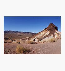 Desert Brush Photographic Print
