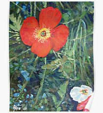 Garden with Bright Red and White Poppies Poster