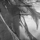 Laguna Palms by joshsteich