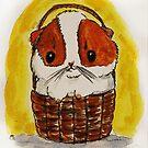 Guinea pig, cavy, pig, piglet, two tone pig  by Edgot Emily Dimov-Gottshall