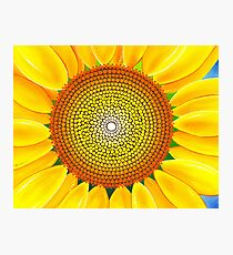 Beautiful sunflower of summer Photographic Print