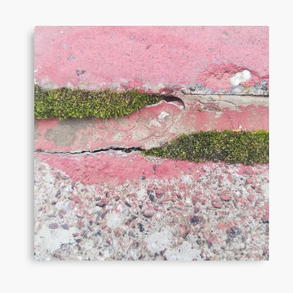 Green Moss and Pink Painted Sidewalk Canvas Print