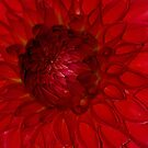 Textures in Red by Rodney55