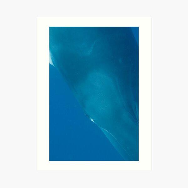 Eye to Eye Minke Whale Art Print