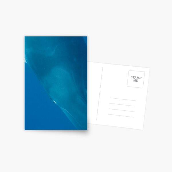 Eye to Eye Minke Whale Postcard