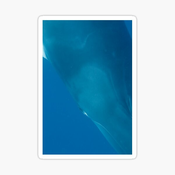 Eye to Eye Minke Whale Sticker
