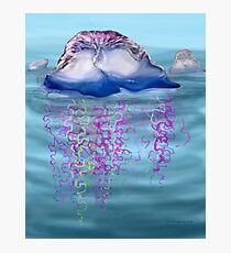 Portuguese man-of-war Photographic Print