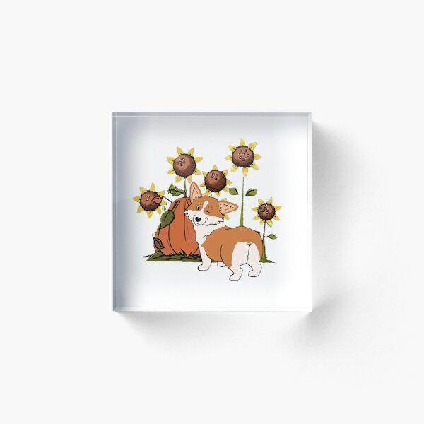 Funny Welsh Corgi with Pumpkin Acrylic Block