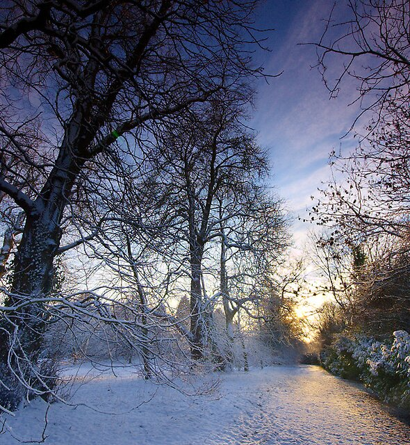 Winters Path by Andrew Leighton