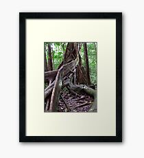 Tree roots - Daintree Rainforest, Far North Queensland Framed Print