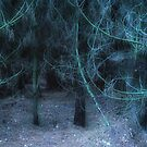 Dare to Enter the Forest by Ann Garrett