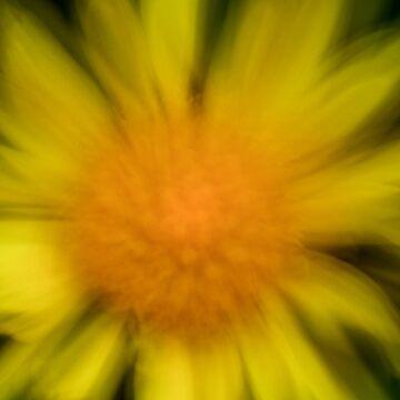 Daisy Burst by brilightning