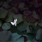 Lotus flower in a pond by by-jwp