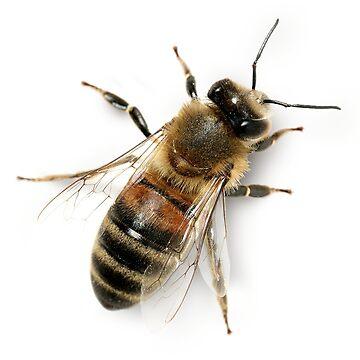 Honeybee by EbtsOby