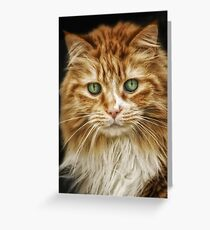 Calico Girl Greeting Card