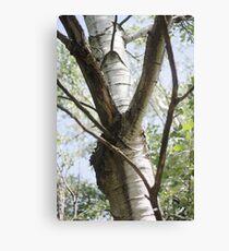 Graceful Birch Canvas Print