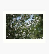 Shimmering Poplar Art Print