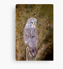 Great Gray Owl Canvas Print