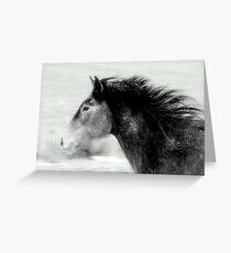 Stallion of the Great Basin Nevada  Greeting Card