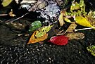 Colorful Leaves in Stream by G. David Chafin