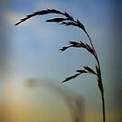 Wheat in Silhouette by G. David Chafin