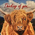 Highland Cow - Thinking of You Card by EuniceWilkie