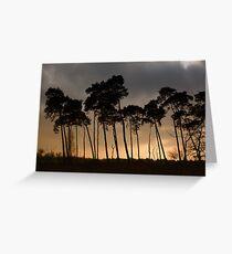 Shadow Trees Greeting Card