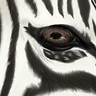 Animals - Zebra by AlexaVampire
