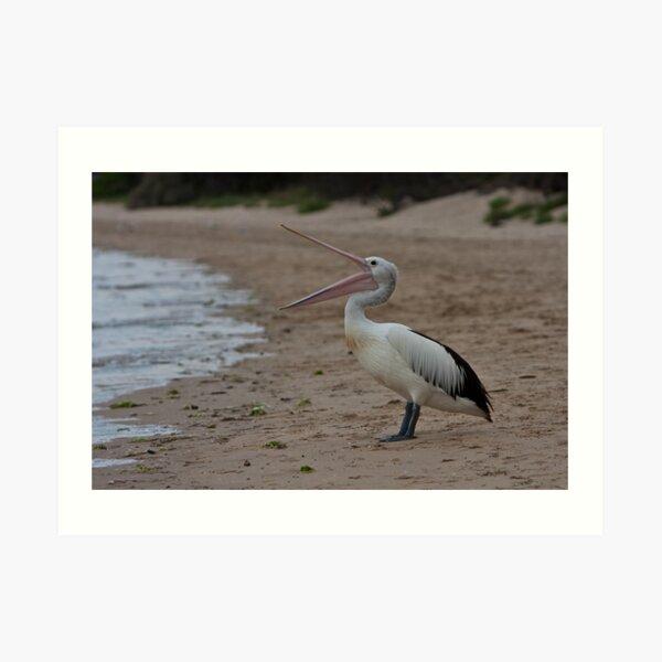 Pelican on Tyrone foreshore Art Print