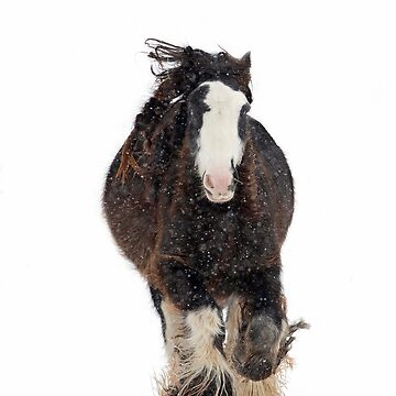 Wildfire - Clydesdale horse in winter by darby8