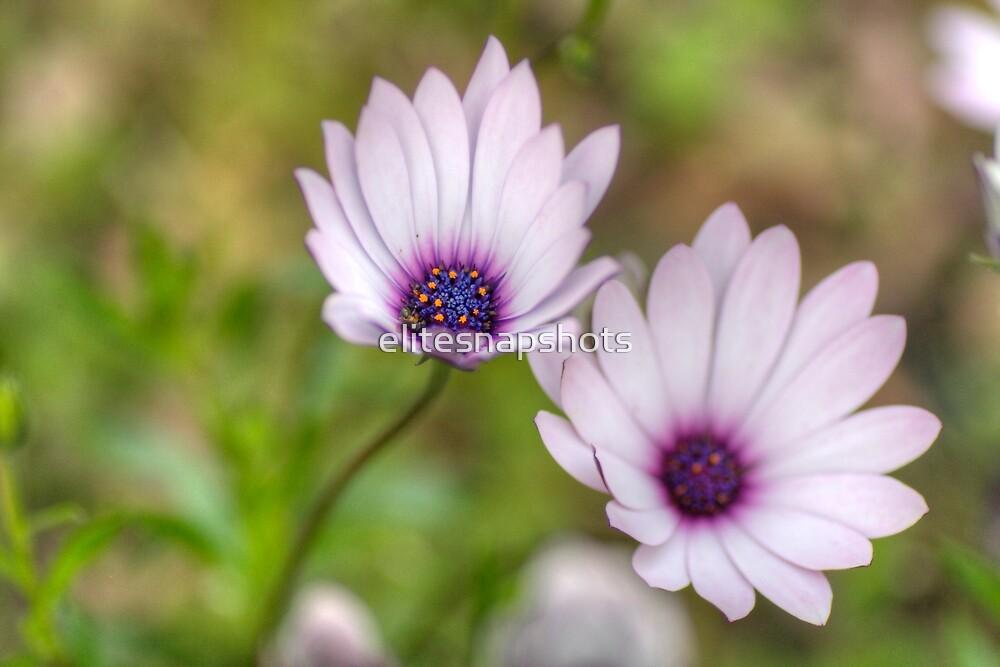 Flower by elitesnapshots