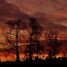 Winter Sunset #2 by Finbarr Reilly