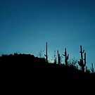 saguaro sunrise by Mark Cosgriff