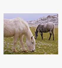 Cornwall:  Ponies Grazing at Roughtor Photographic Print