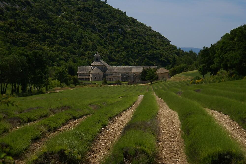Senanque Abbey - Provence giu 09 by Bru66