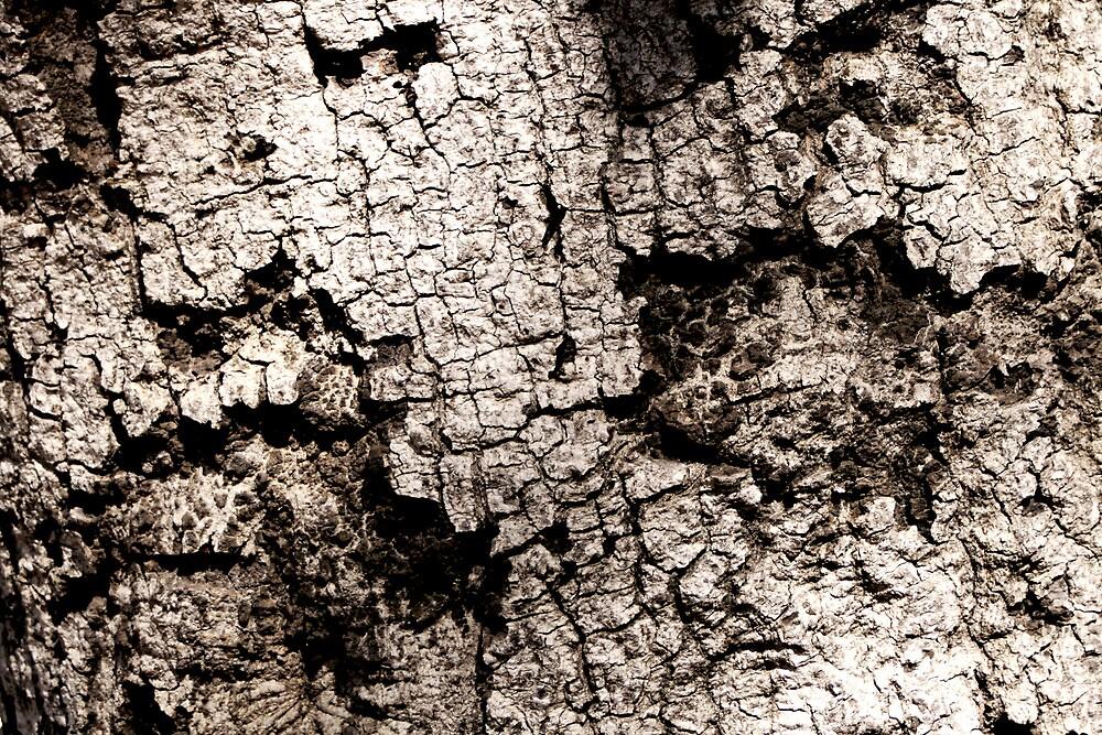 Calabasas Oak Tree Trunk by Michael Berns